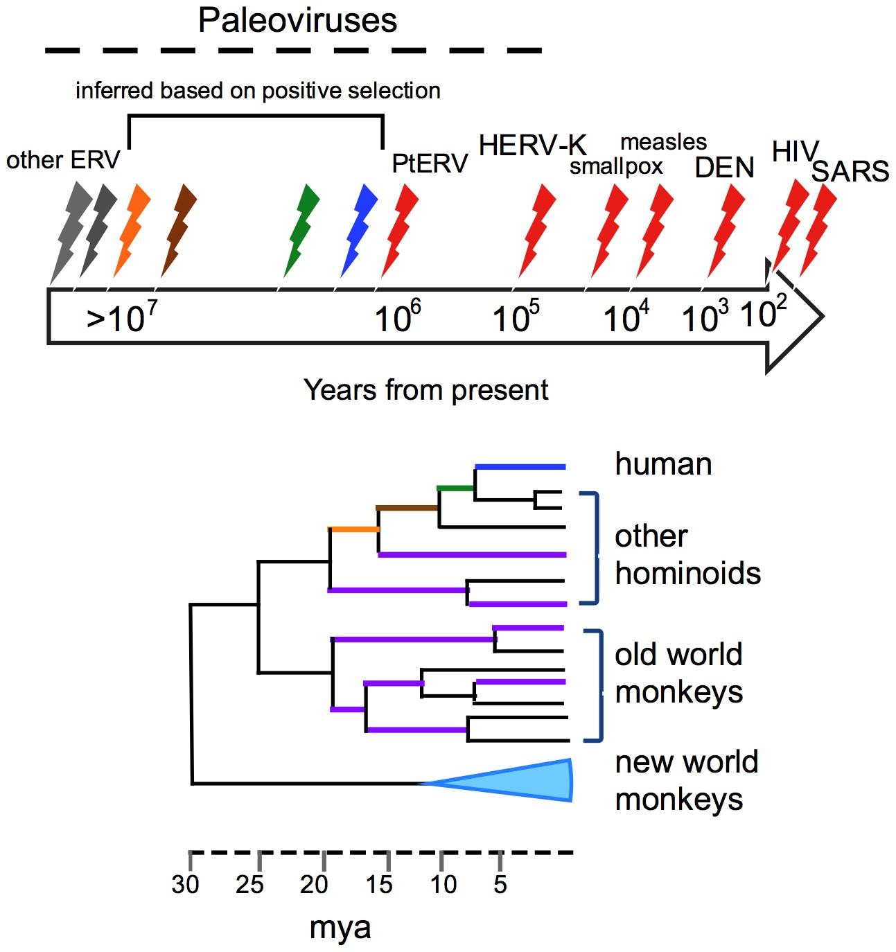 Paleoviruses