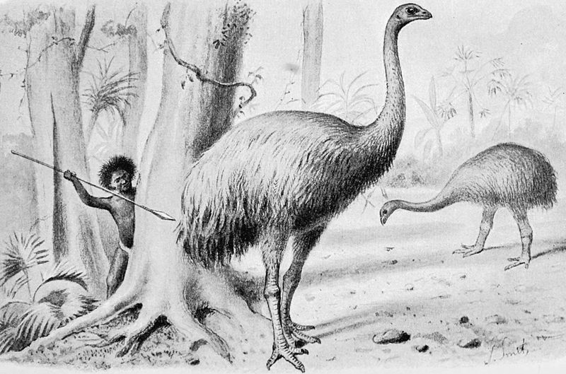 South Island giant moa