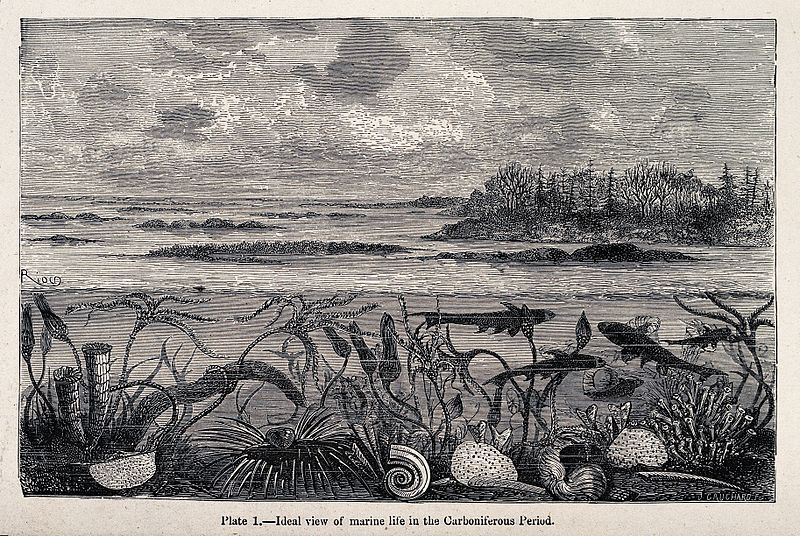 Carboniferous marine