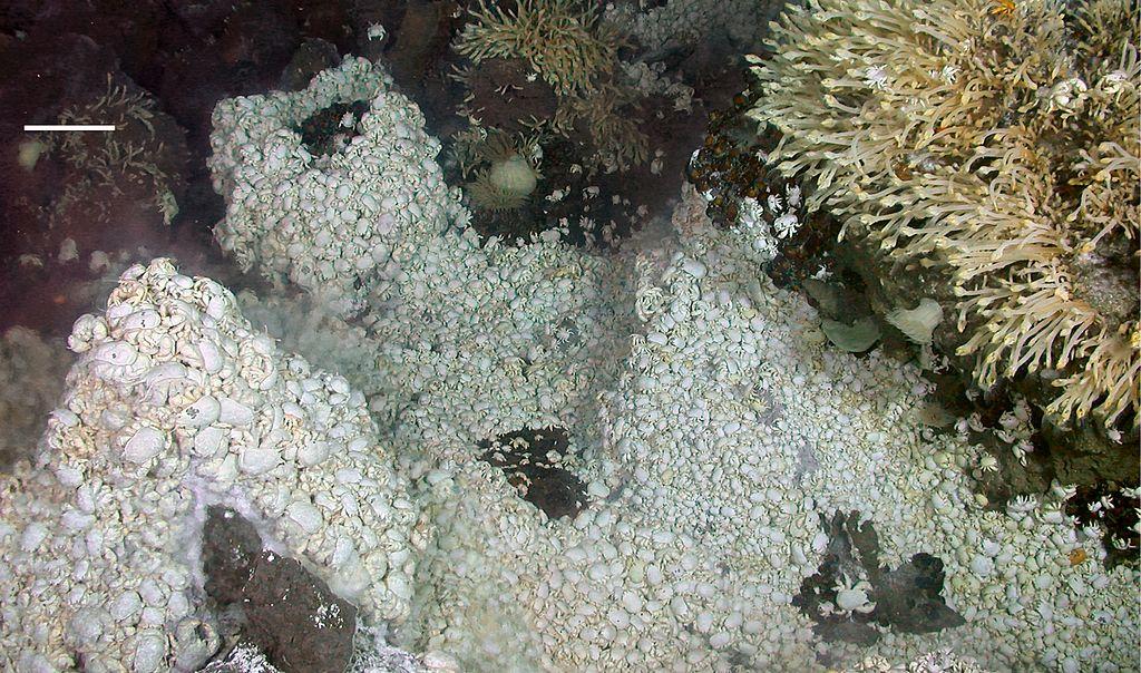 Hydrothermal vent ecosystem