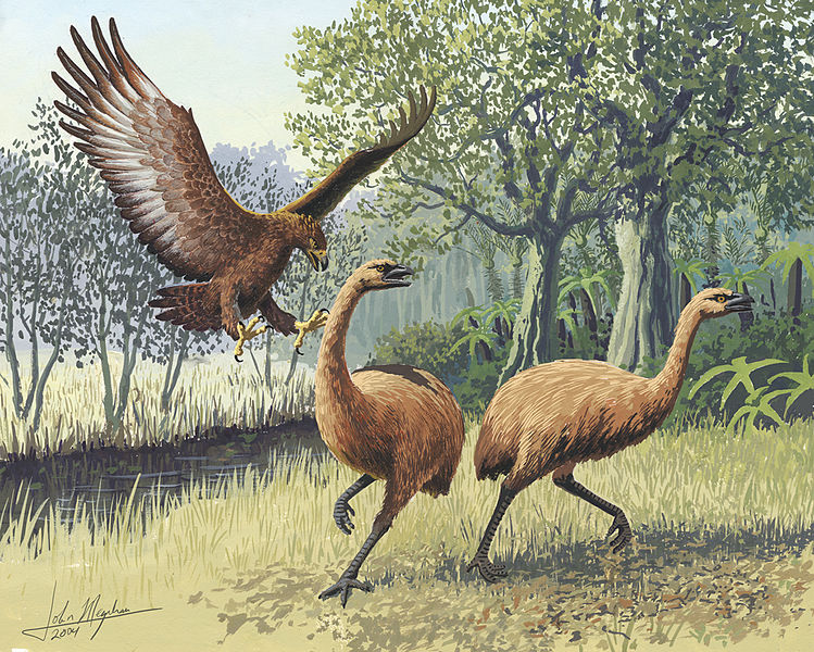 Haast's Eagle Attacking Moas