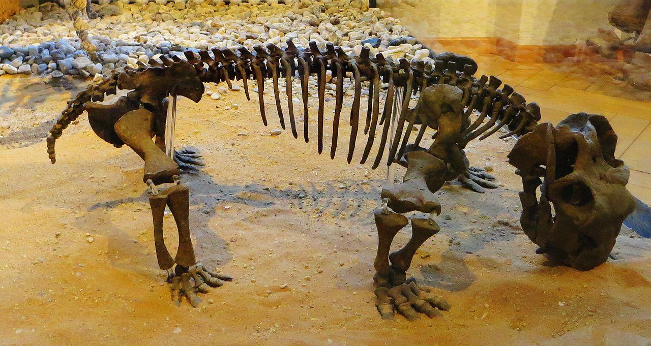 Lystrosaurus hedini